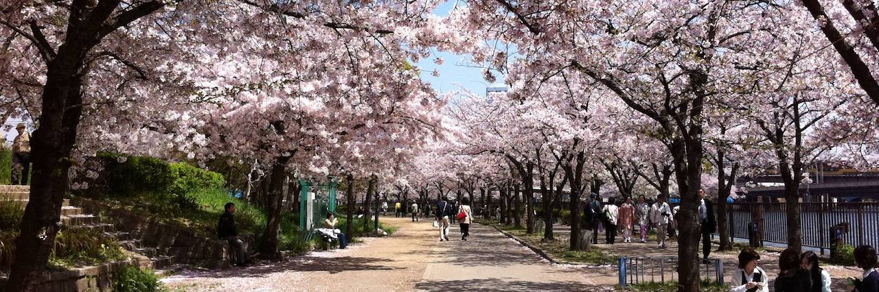 an image of sakura street in Japan